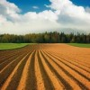 Study confirms minor role of EU biofuels on rising food prices