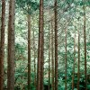 Stump to Pump project to investigate liquid biofuels from forestry waste in New Zealand