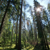 UPM and WWF Finland co-operate to promote sustainable wood-based biofuels