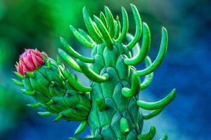 Prickly Pear Cactus Credit: Flickr/Wayne S. Grazio
