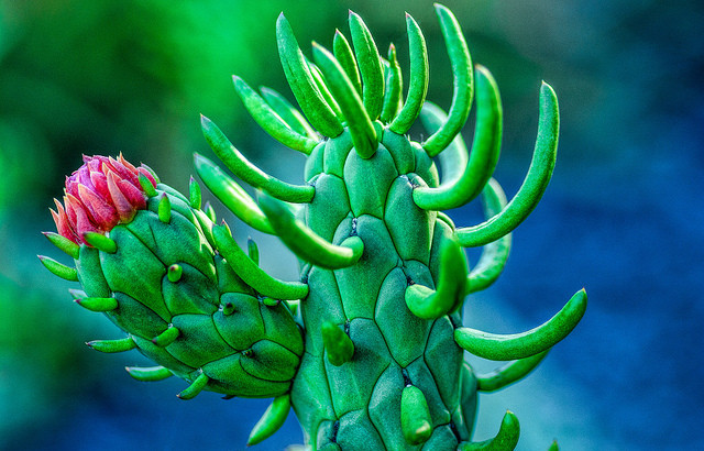 In Mexico, cars will soon run on cactus biomethane