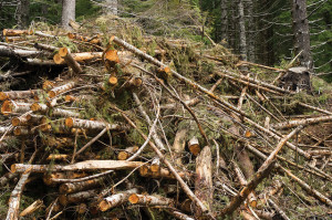 Forest slash. Source: Oregon Department of Forestry