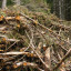Forest residues for bioenergy with CCS – a tool for global cooling?