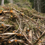 The role of woody biomass in contributing to EU 2020 renewable energy target