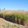 Marginal Lands for Growing Industrial Crops: Turning a Burden into an Opportunity