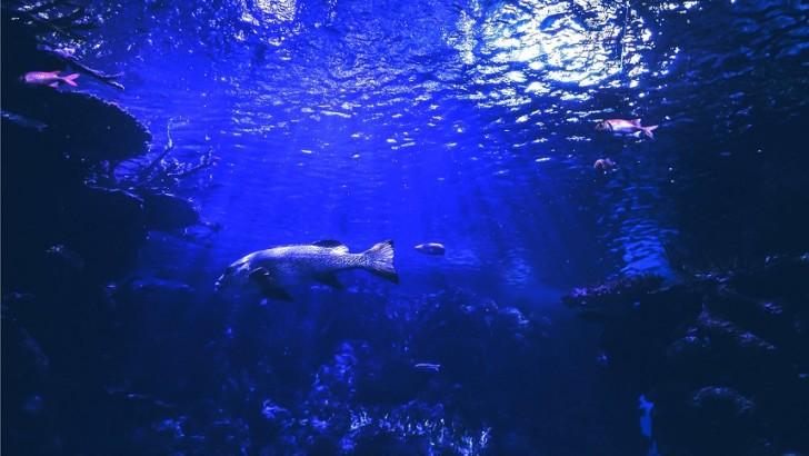 Bringing Forward Europe's Marine Bioeconomy – EMBRIC project