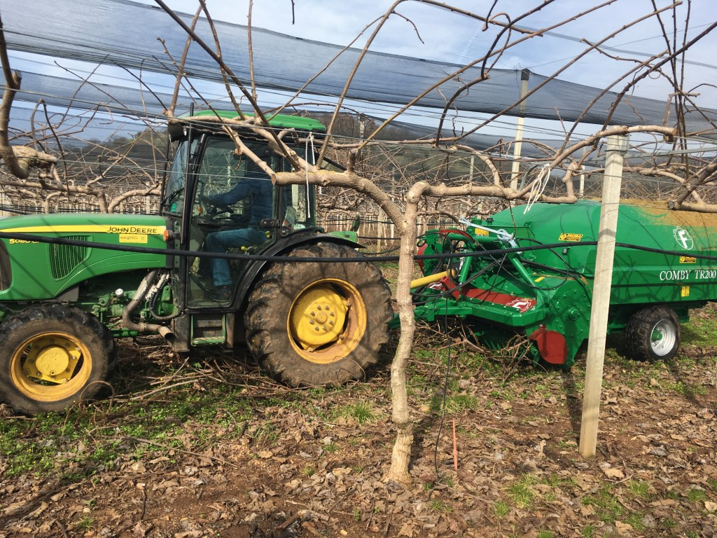 uP_running project demonstration in Greece: harvesting of kiwi prunings using a FACMA TR200 integrated harvester/shredder (Source: CERTH, uP_running)