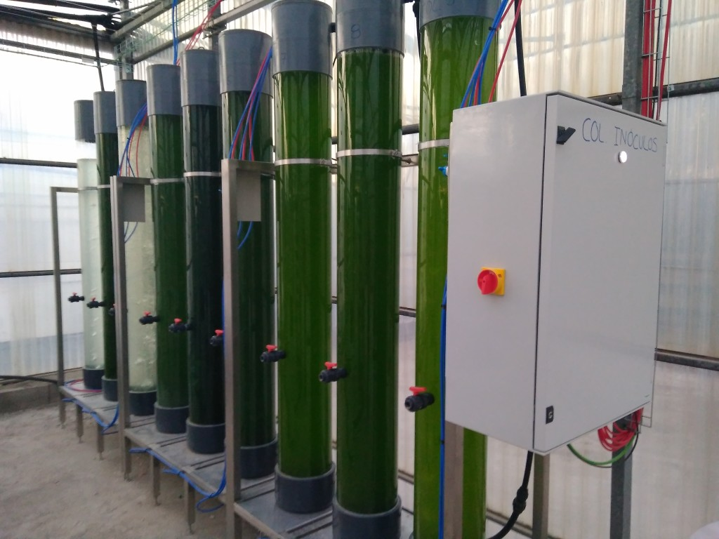 Image of bubble column photobioreactors used to produce inoculum of selected microalgae in DEMO R&D facility.