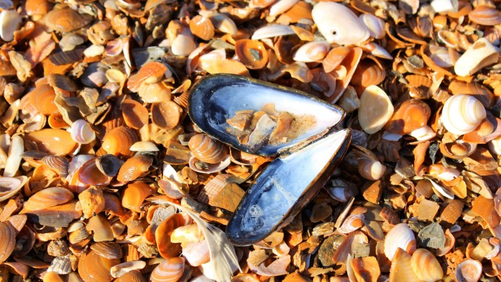 Consumers' Perception of Products with Bioactive Compounds From Seafood Residues