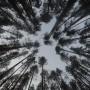 Finland sets world-leading 30% biofuel obligation for 2030