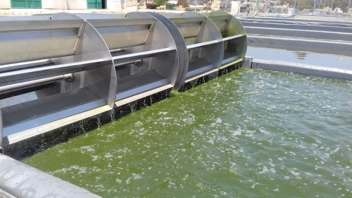A microalgae perspective to enhance the sustainability of food production – SABANA Project