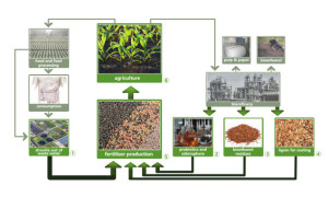 Fig. 2: Circular bioeconomy approach in SUSFERT; grey pictures are not part of this project (© RTDS)
