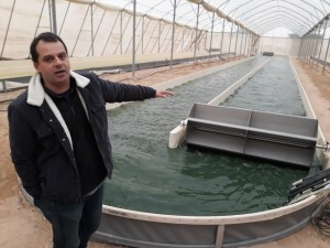 Algae production pond at Israel